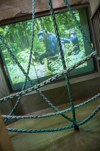 Zoo Hodonín bei Brünn entscheidet sich für Epson Projektoren