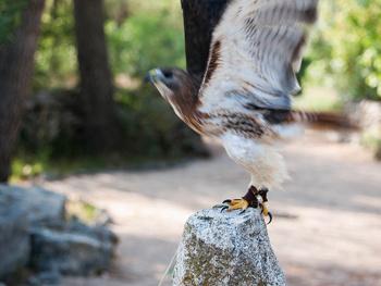 Epson hilft beim Schutz seltener Vögel in Kroatien