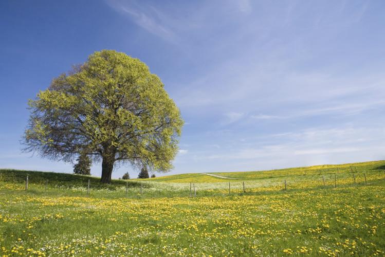 Piantare alberi per combattere il riscaldamento globale
