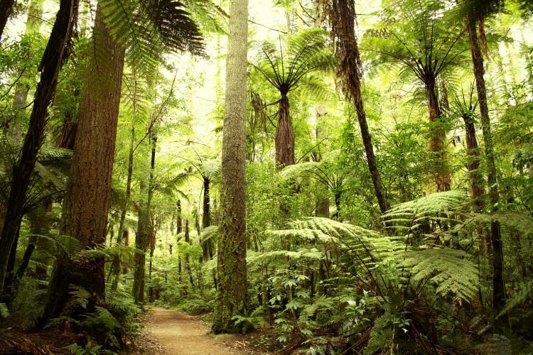 Un milione di specie vegetali e animali a rischio estinzione di massa.