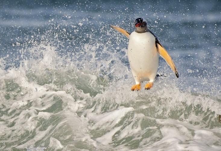Pingviinit ja Etelämantereen vesien hyiset maisemat pääkaupunkiseudun kauppakeskuksissa